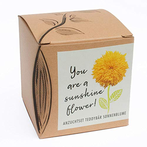 Set regalo per la coltivazione 'Sunshine Flower', orsacchiotto girasole